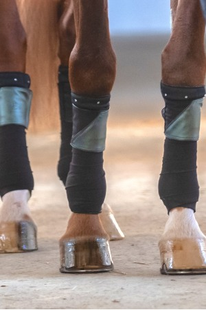 Technical Horse Bandage Pads - CRYSTAL (4er/set)