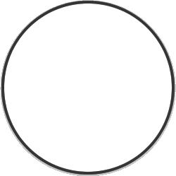 white/dressage